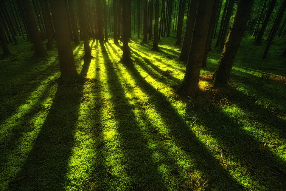 ¿Por qué nos viene bien estar en contacto con la Naturaleza?